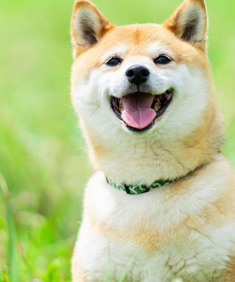 堺市の東山動物病院 美容・健康管理・治療を一貫した動物病院